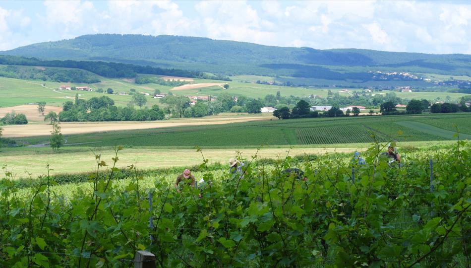 Mont Épin